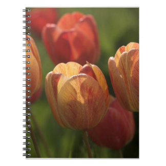 Tulip Blossoms Notebook