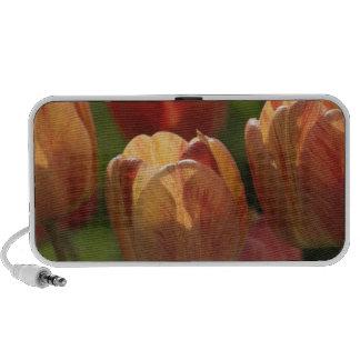 Tulip Blossoms Speakers