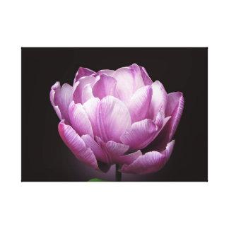 "Tulip ""Blue Diamond"" Canvas Print"
