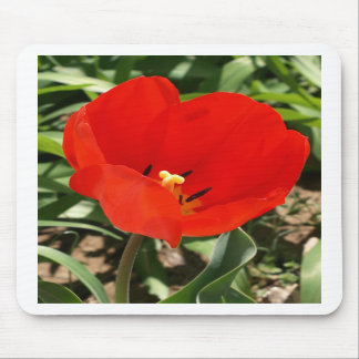 Tulip Brilliance - spring tulip flower mousepad