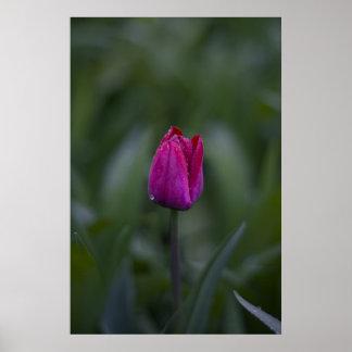 Tulip bud print