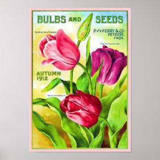 Tulip Bulbs Catalog Illustration Poster