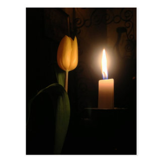 Tulip by Candlelight Postcard
