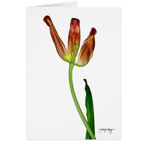 """""""Tulip"""" by J. Maya Luz Card"""