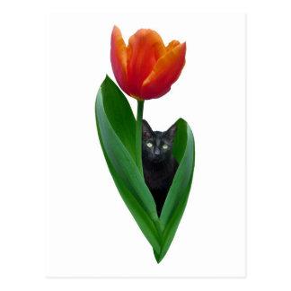 Tulip Cat Purple Postcard