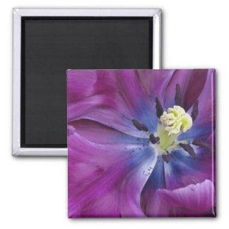 Tulip close-up, Keukenhof Gardens, Lisse, 2 Magnets