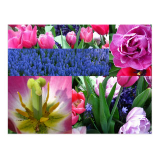 tulip collage postcard