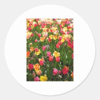 tulip,coloful classic round sticker