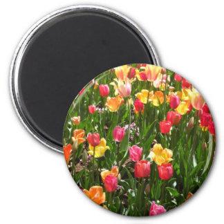 tulip coloful refrigerator magnets