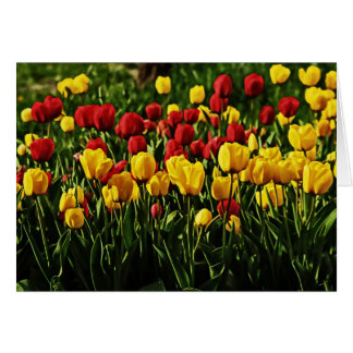 Tulip Delight Greeting Cards