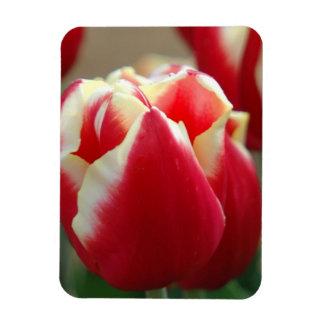 Tulip Design Premium Magnet