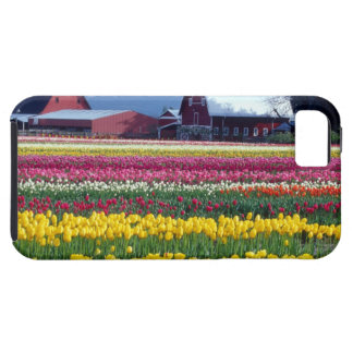 Tulip display field iPhone 5 cover