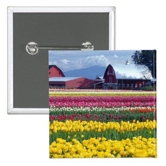 Tulip display field pinback button