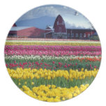 Tulip display field plates