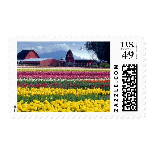 Tulip display field postage