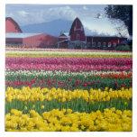 Tulip display field tiles