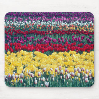 Tulip display garden in Skagit county Mouse Pads