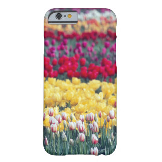 Tulip display garden in the Skagit valley, Barely There iPhone 6 Case