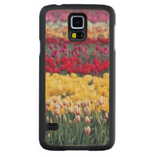 Tulip display garden in the Skagit valley, Carved Maple Galaxy S5 Slim Case