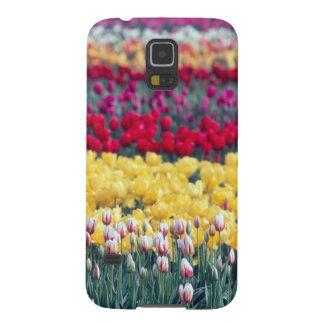 Tulip display garden in the Skagit valley, Case For Galaxy S5