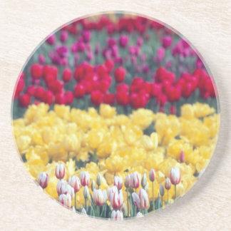 Tulip display garden in the Skagit valley, Drink Coaster