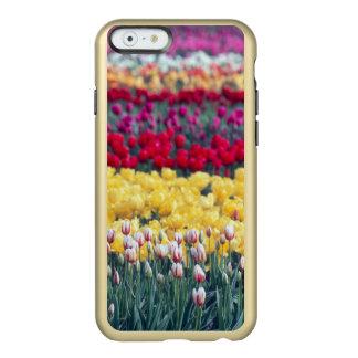 Tulip display garden in the Skagit valley, Incipio Feather Shine iPhone 6 Case