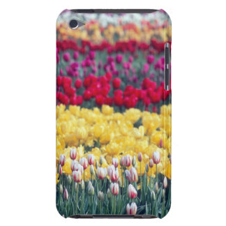 Tulip display garden in the Skagit valley, iPod Touch Case-Mate Case