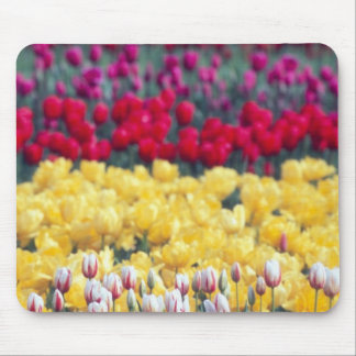 Tulip display garden in the Skagit valley Mouse Pads