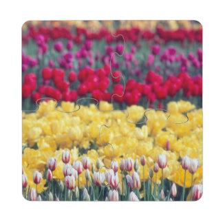 Tulip display garden in the Skagit valley, Puzzle Coaster