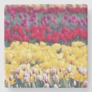 Tulip display garden in the Skagit valley, Stone Coaster