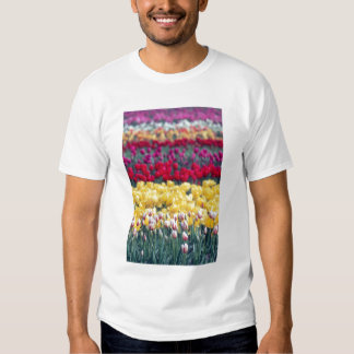Tulip display garden in the Skagit valley, T-shirt