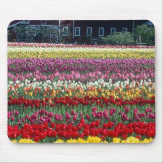 Tulip display garden Skagit county Mousepads