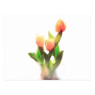 Tulip Dream Postcard