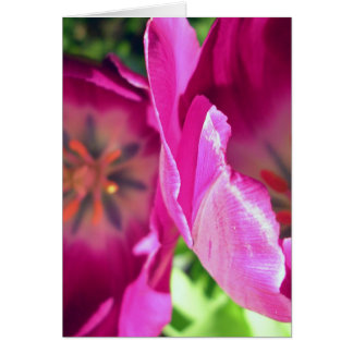 Tulip Duo Card