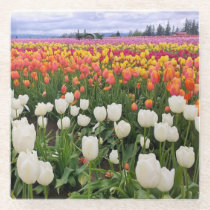 Tulip Farm Glass Coaster