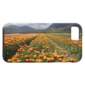Tulip Farm near Agassiz, British Columbia, iPhone SE/5/5s Case
