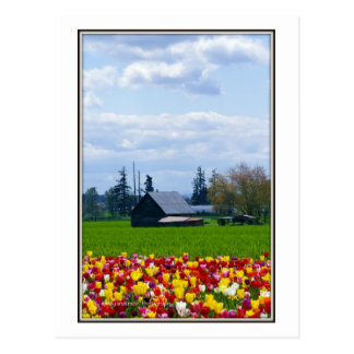 Tulip Farm  -   Postcard