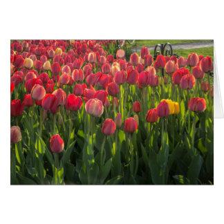 Tulip Fesitval Card