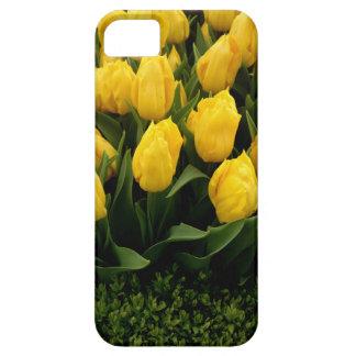 Tulip Festival - 27 IPhone 5/5S Cases