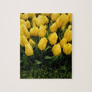 Tulip Festival - 27 Jigsaw Puzzle