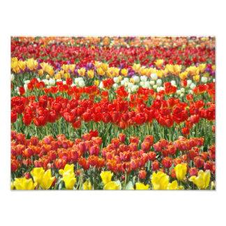 Tulip Festival Photography Fine Art Prints Art Photo