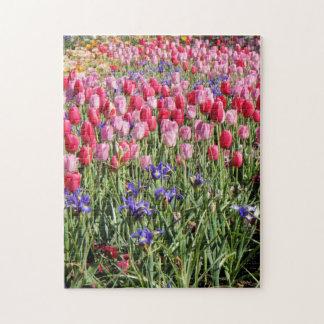 Tulip festival puzzle