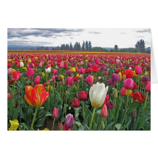 Tulip Festival Stationery Note Card