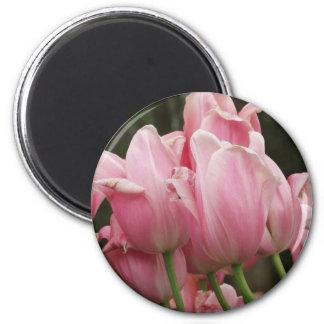 Tulip Festivals Magnet