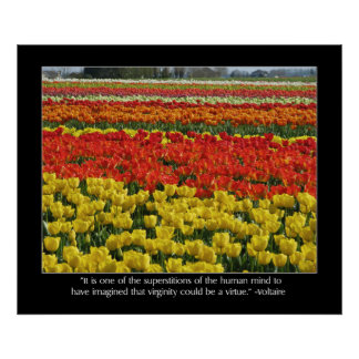 Tulip Field and Voltaire Quote Poster