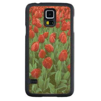 Tulip field blooms in the spring. carved maple galaxy s5 slim case
