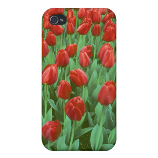 Tulip field blooms in the spring iPhone 4/4S covers