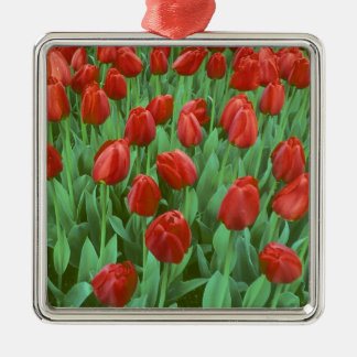 Tulip field blooms in the spring. metal ornament