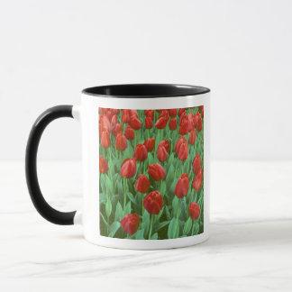 Tulip field blooms in the spring. mug