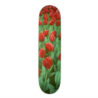 Tulip field blooms in the spring. skateboard deck